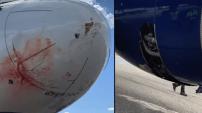 VIDÉO. Un avion opère un atterrissage d'urgence après un choc aviaire