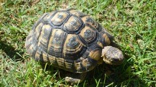 Port de Marseille : des tortues rares dans la voiture d'un voyageur algérien