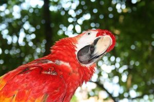 There's a macaw with a quizzical look.