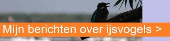 banner ijsvogels