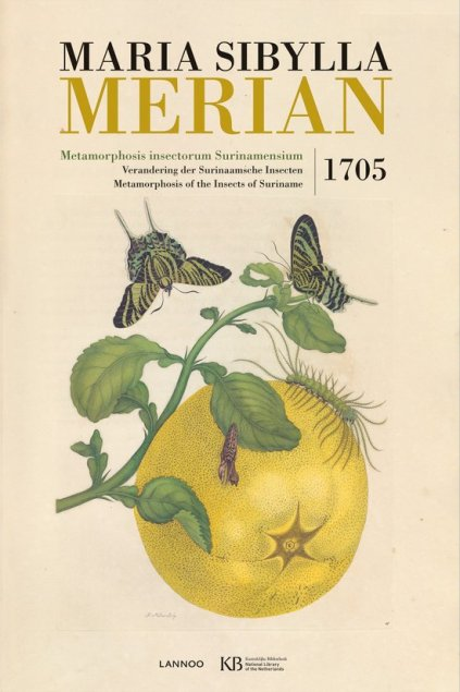 maria-sibylla-merian-metamorphosis-insectorum-surinamensium