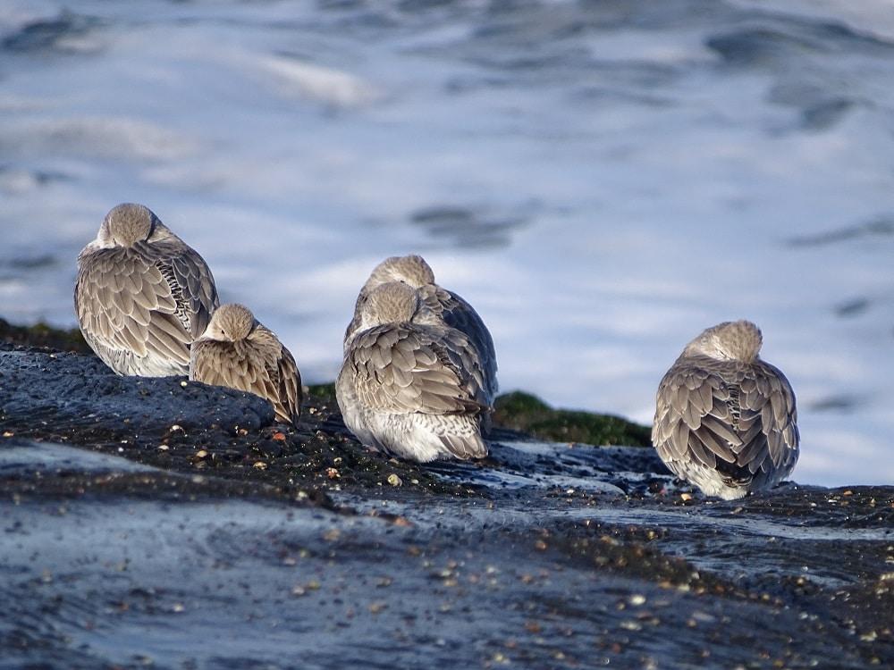 vogelgids zeeland