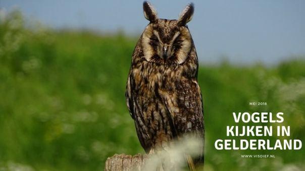 Vogels kijken in Gelderland