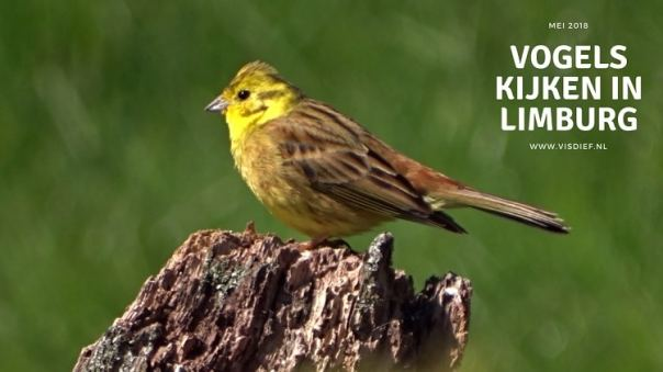 Vogels kijken in Limburg