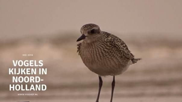 Vogels kijken in Noord-Holland