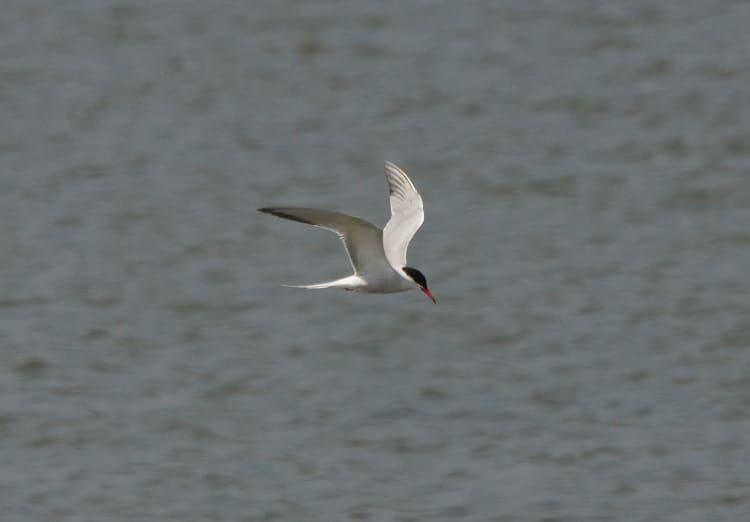 vogels kijken op de afsluitdijk
