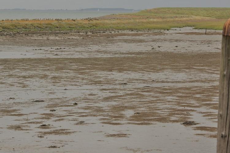 mooiste plekjes van zeeland noord beveland sjaak huijer