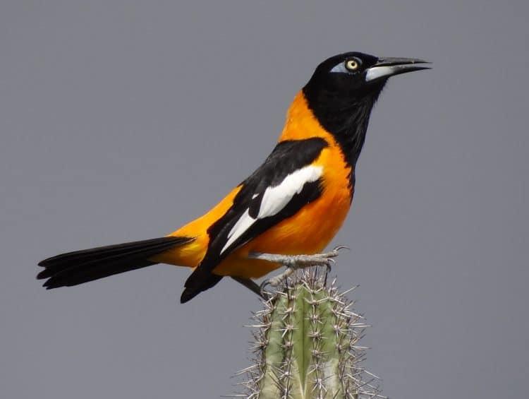 vogels kijken op aruba