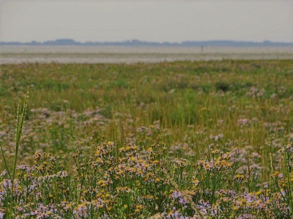 uitzicht over de westplaat maasvlakte