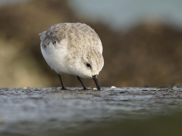 vogels kijken brouwersdam sjaak huijer c
