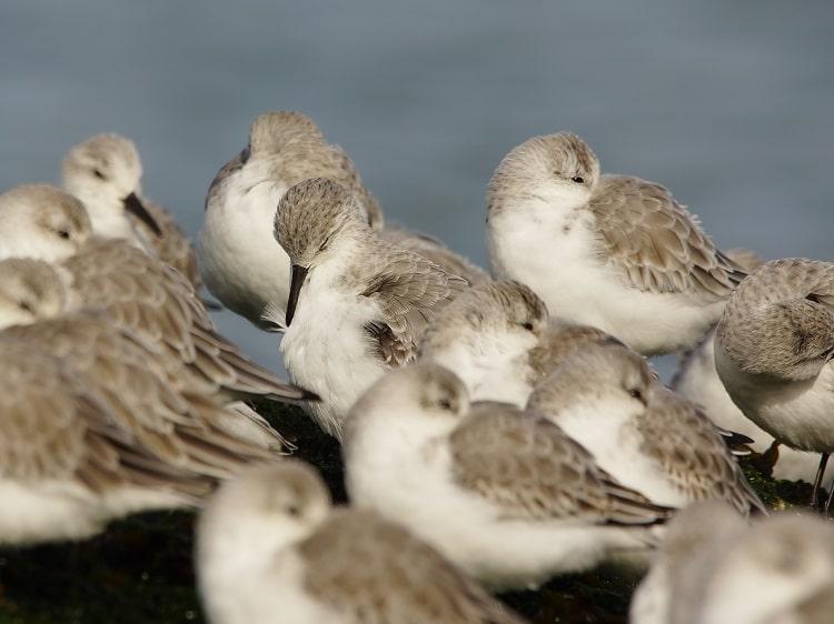 vogels kijken brouwersdam sjaak huijer d