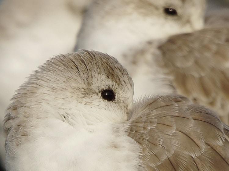 vogels kijken brouwersdam sjaak huijer e