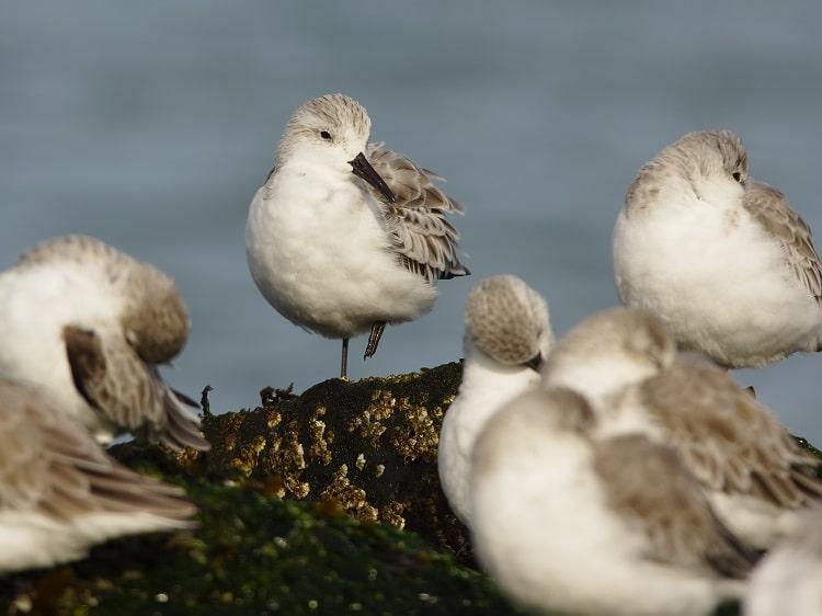vogels kijken brouwersdam sjaak huijer f