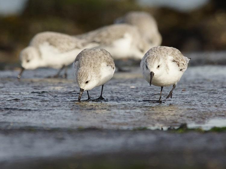 vogels kijken brouwersdam sjaak huijer