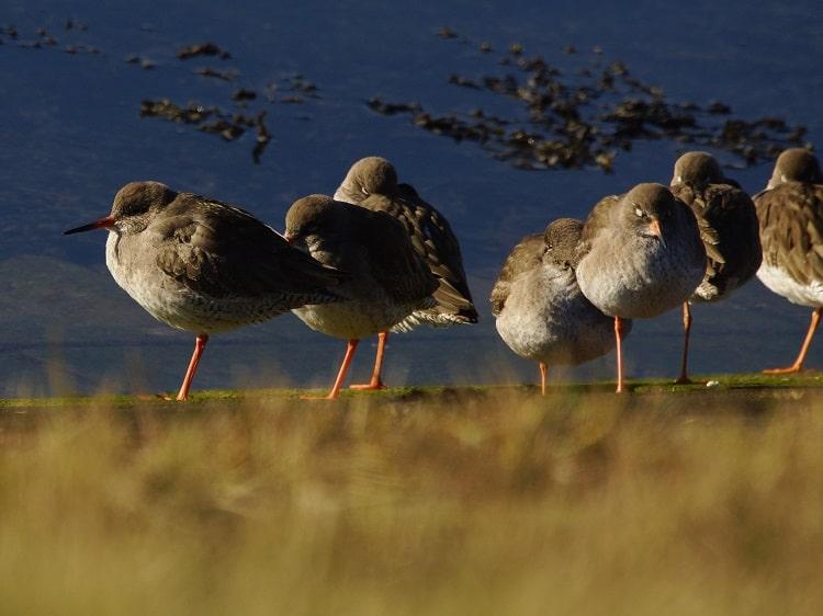 de beste vogelgebieden in zeeland