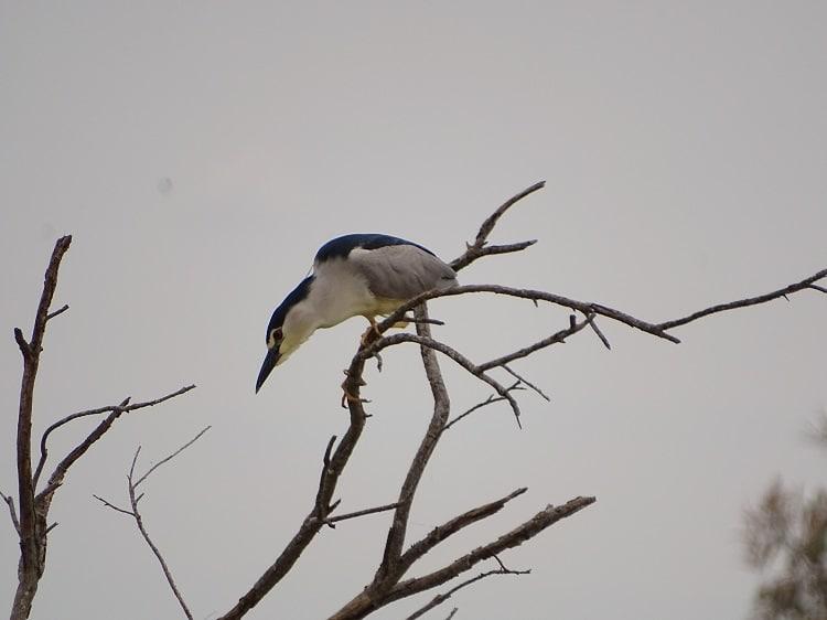 vogels kijken in Étang de Scamandre