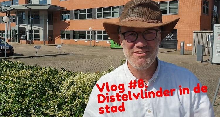distelvlinder in amsterdam