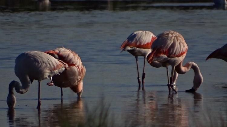 flamingo's bij de oesterdam