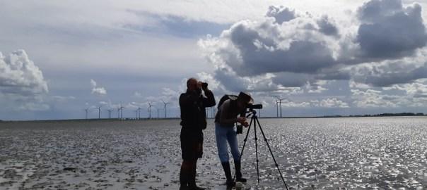 beste vogelgebieden van nederland
