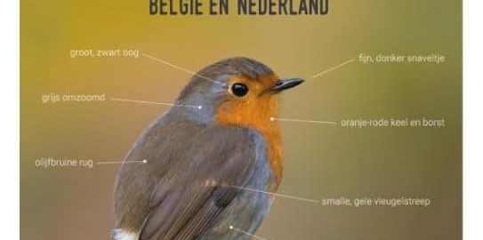 recensie de slimste vogelgids jan rodts