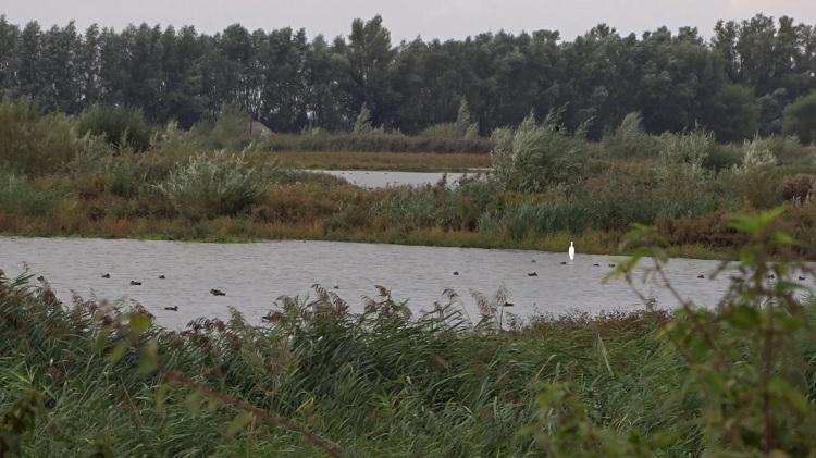 tongplaat biesbosch vogels kijken