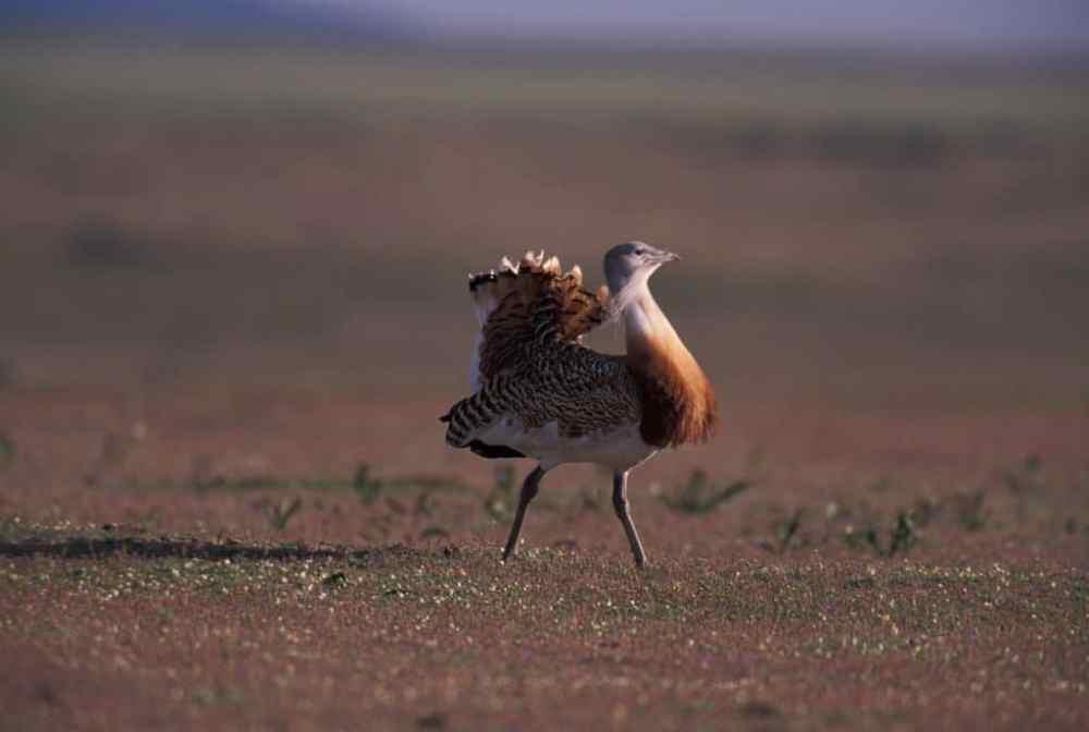 de mooiste vogelreizen in europa extremadura