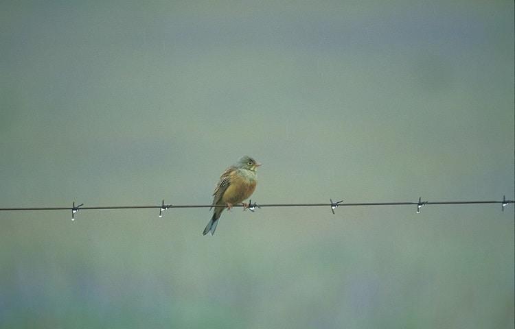 vogelreizen spanje