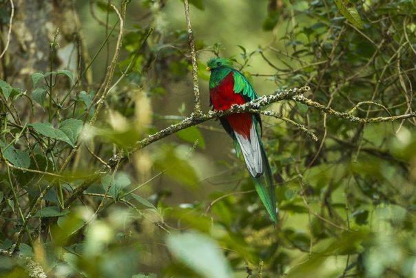 N° 4: Stichting Vogelreizen