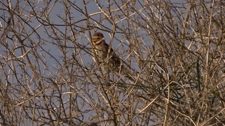 vogels kijken op de tongplaat