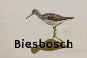 vogelgebied van de maand biesbosch