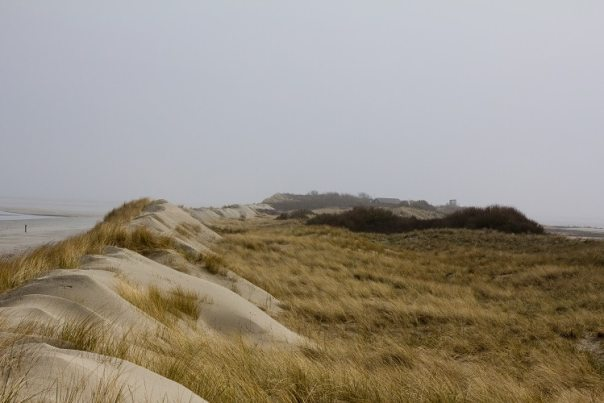De stuifdijk op Rottumerplaat (foto: Doortje Dallmeijer)