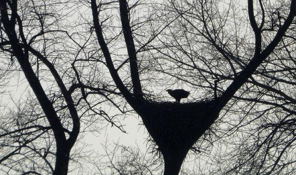 Nest van de zeearend aan het Zwarte Meer (Foto: Martijn de Jonge)