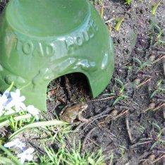 hoe lok ik amfibieën naar mijn tuin