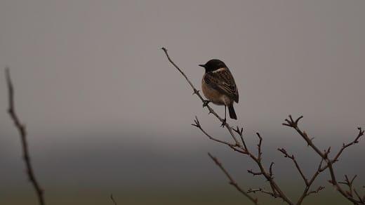 vogelwandeling bij hilversum