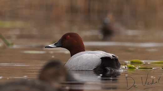 vogelwandeling oudewater en polsbroekerdam