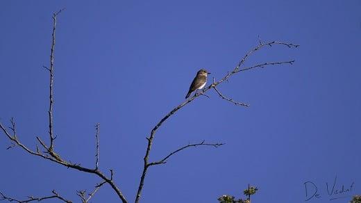 vogelwandeling bij waardhuizen door het pompveld
