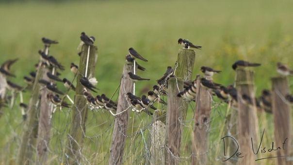 Vogels kijken in het najaar