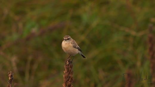 vogelwandeling op maasvlakte II