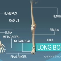 Names Of Bones In Human Skeleton Diagram 1 Light 2 Switches Wiring Plum Inside How To Wire Two Lights E Switch With Types Learn Anatomy Examples 9 Long Found The Body