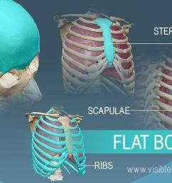 flat bones protect internal organs [ 1232 x 863 Pixel ]