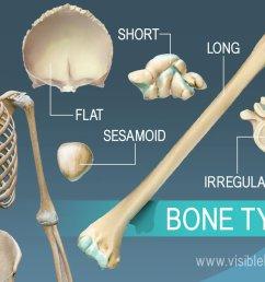 overview of 5 bone types long short flat irregular and sesamoid [ 1232 x 863 Pixel ]