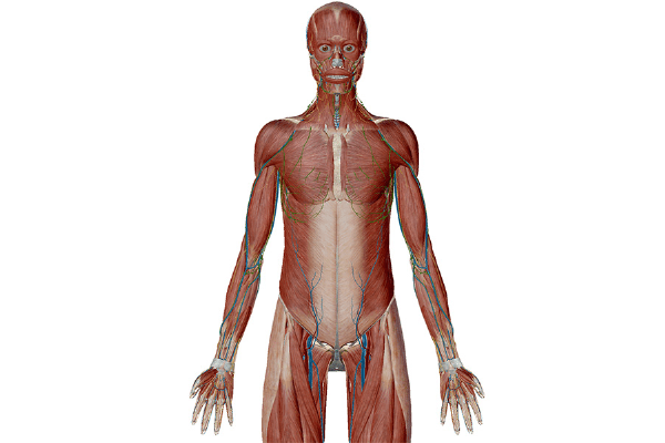 Anatomy and Physiology: Anatomical Position and ...