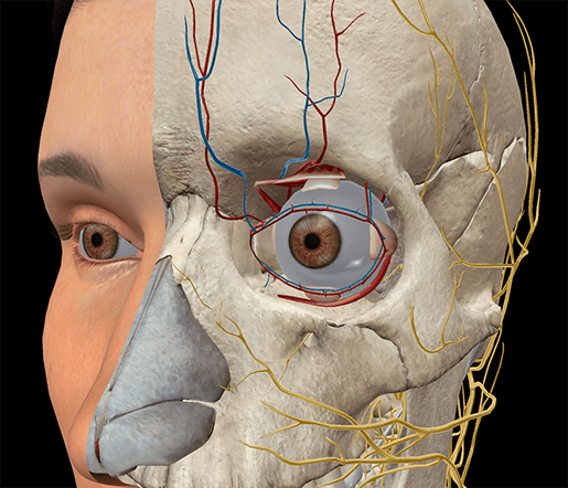 anatomy and physiology the