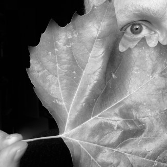 Sunday Selfie - 'Fallen leaf III' - Visible Word - photograph (c) David Bailey (not the)