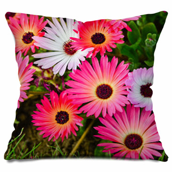 mesembryanthemum daisy flowers throw pillow