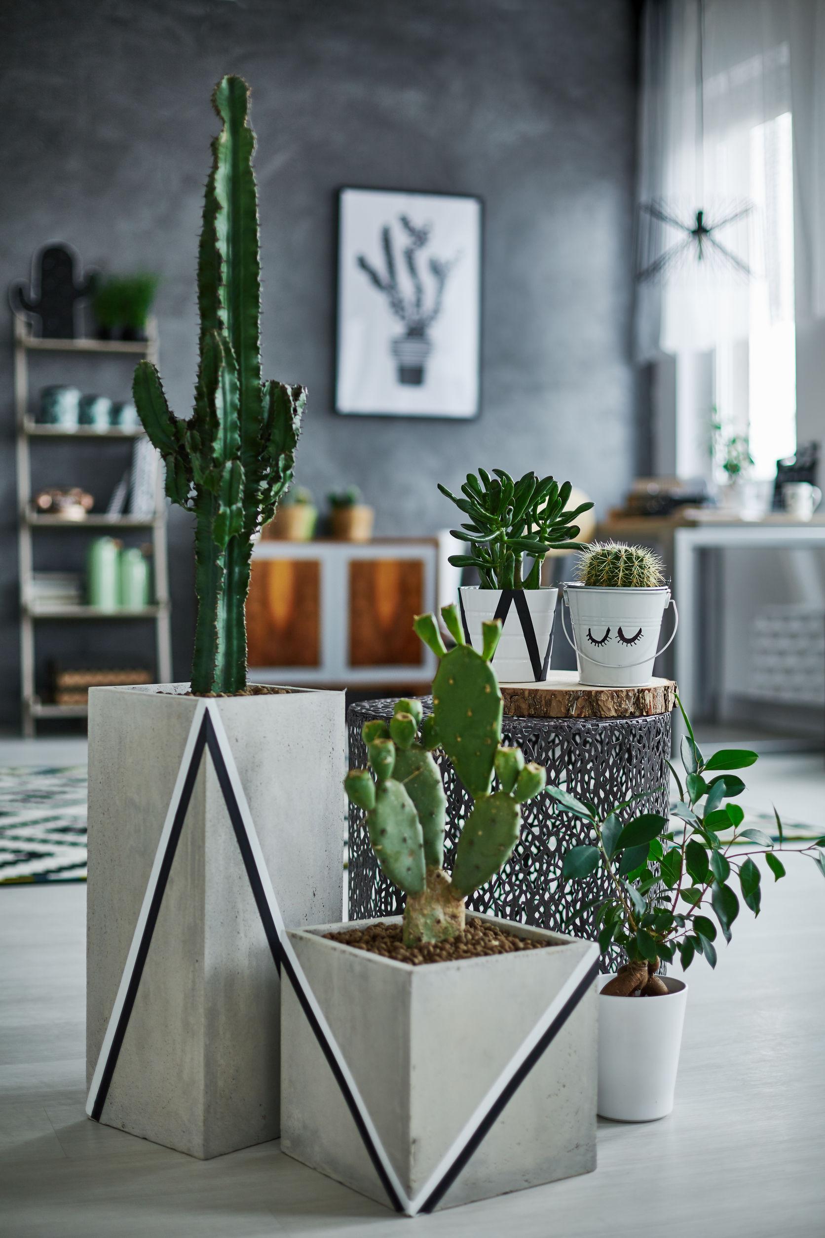 Comment dcorer votre intrieur avec des plantes vertes