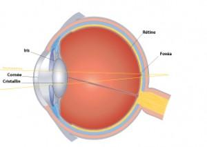 Les défauts de la vision hypermétropie