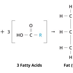 Fat Structure Diagram Photocell Switch Fats And Proteins Biology Visionlearning Figure 1 A Molecule The R In Three Fatty Acids Represents Long C Chain Triglyceride Rs May Or Not Be Same
