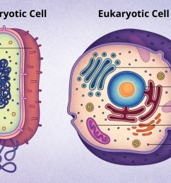 typical eukaryotic cell diagram [ 1400 x 739 Pixel ]