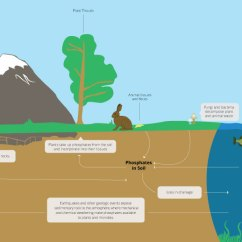 Explain Water Cycle With Diagram Alarm Wiring Diagrams The Phosphorus | Earth Science Visionlearning